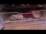 Мерлин разбирает зимние вещи в ящиках